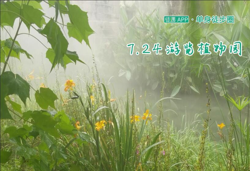 7.24成都植物园赏花,木芙蓉、野株菊、黄秋英、黄菖蒲、向日葵……