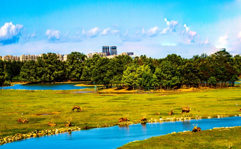 南海子公园,遇见麋鹿、天鹅、苍鹭,观赏皇家苑囿胜景