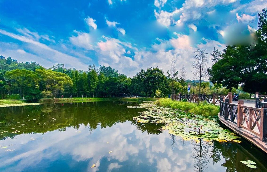 大夫山森林公园,8公里山湖绿道