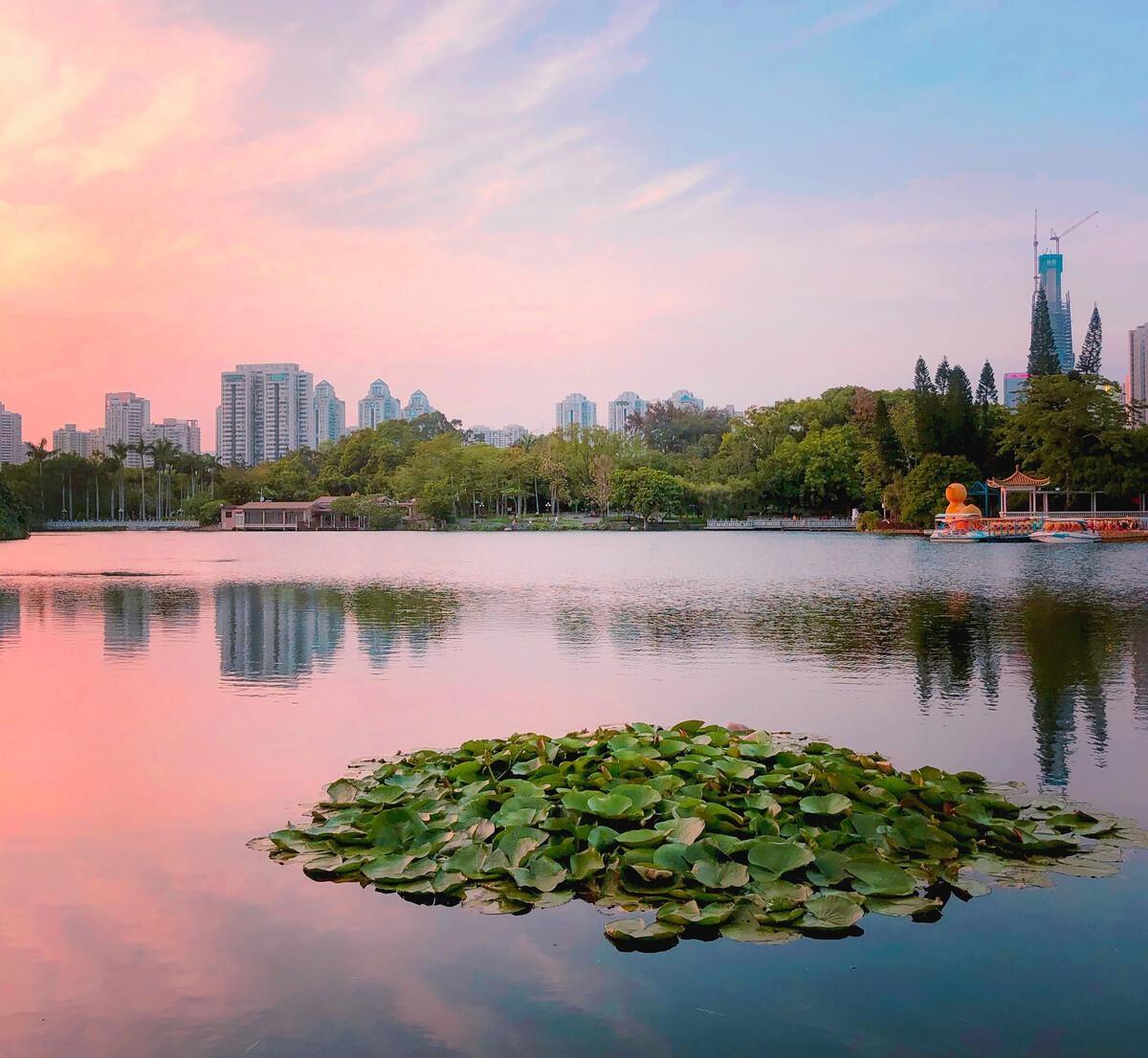 相约深圳网红艺术馆,漫步荔枝公园