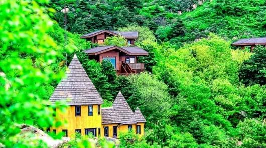 童话树屋|打卡京郊超火童话树屋-行摄北京普罗旺斯花海