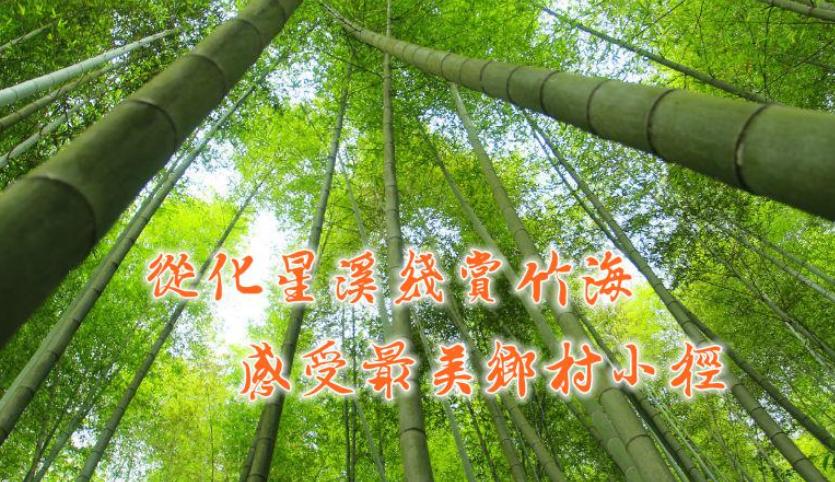 【星溪线】4月5日 从化星溪线赏竹海 感受最美乡村小径